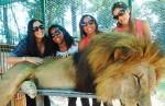 動物園疑「下藥」萬獸之王任人摸