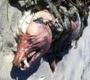 風暴侵襲過後 神秘怪獸橫屍加州海灘