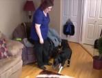 狗狗凍傷遭截肢 裝上義肢重拾活力