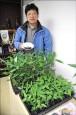 10年有成 人工種植山胡椒存活率8成