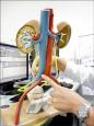 輸尿管改道壓迫 讓人腰痛到不行