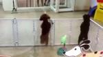 動物界的麥可傑克森! 狗狗居然會跳踢踏舞