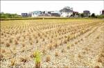 10年最大規模停灌 衝擊稻米產業鏈