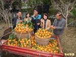 獅潭鄉「橘莓戀」 1/31揪你來