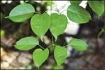 〈植物大觀園〉年節應景植物 火力全開
