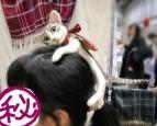 貓咪乖乖趴頭上? 日本網友好手藝