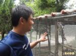 避免疫「禽」入侵 學校禁止學生接觸寵物鳥