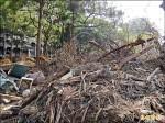 永康公園預定地建屋 居民發起救樹