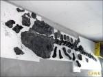 澎湖原人出水 專家催生博物館