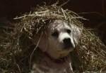 去年超級盃最夯廣告 小狗與馬兒再續前緣