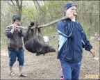 山豬擾民 原民警設陷阱逮捕