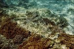探索號擱淺 破壞保護區珊瑚礁