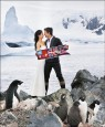 Janet南極結婚 企鵝當花童萌翻