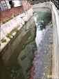 水圳乾涸 「綠」水里幾成「臭」水里