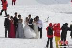 強國人遊南極追著企鵝跑 中媒痛批不文明