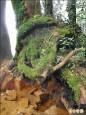 林管處長登山 巧捉山老鼠