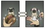 狗狗眼中的世界 插畫家來告訴你