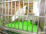 台南6隻黑琵 疑染肉毒桿菌死亡