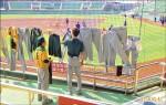 天津獅球場曬衣 義大見證奇蹟