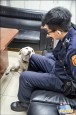 拉布拉多犬迷路 「賴」警所不走