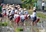 200學童下田插秧 栽種有機鴨間稻