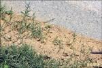 八德大發公園 上月3童被紅火蟻咬傷