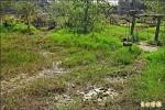 草湳濕地乾涸 衝擊螢火蟲生態