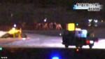 北海道機場連2日鹿群闖入 30餘航班延誤