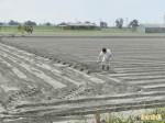 毛豆契作價格7年不漲 農民放棄種植