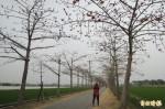 全球15條最美花道 白河林初埤木棉道湧人潮