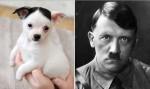 超萌吉娃娃長「小鬍子」 被戲稱神似希特勒