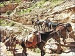 〈實現我的旅遊夢〉一步一回憶─美國大峽谷健行記