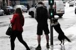 英國牧羊犬守規則 自己會按紅綠燈過馬路