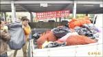 台中福壽螺收購熱烈 公所經費用光光
