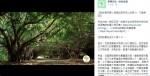 賴清德臉書宣布綠隧保留 護樹團體:口頭說法不具效力
