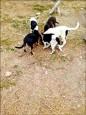 6犬遭關洞險活埋 網友痛批變態