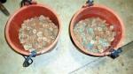 過路財神?農民挖到古錢幣 專家:不值錢