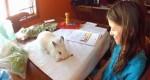 小白兔「伴讀」?看牠如何督促學生做作業
