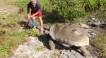 交配被打擾 象龜展開「史上最慢追殺!」