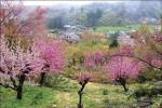 福氣之島春日遊─日本福島