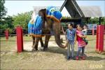 台灣最老亞洲象 今下台一鞠躬
