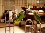 鸚鵡高唱經典老歌 高音轉音都難不倒牠