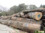 林務局3次鑑定確為漂流木 技士被記申誡