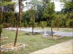免費申請 公有樹葬穴位已使用三分之一
