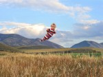 「飛吧寶寶!」 攝影師為唐氏兒拍飛行照激勵人心