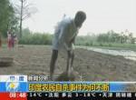 反常降雨殃及農作物 印度600多農民自殺
