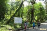 為空污找解藥 溪頭擬打造森林療癒基地