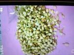 中藥行茉莉花檢驗不合格 高達4種農藥殘留