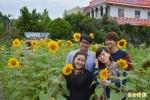 遊客採向日葵 做花茶、拉麵