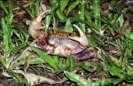 南海溪蟹的故事 獲休士頓影展金牌